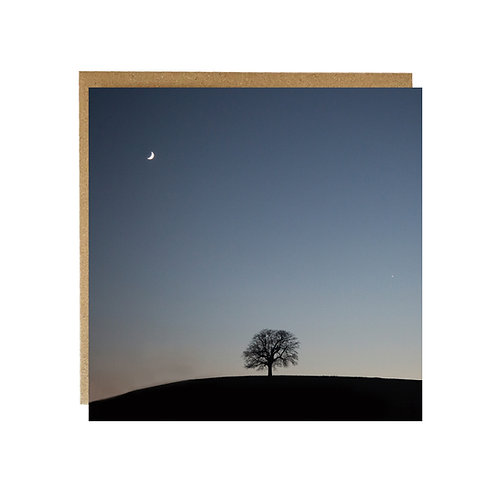 One tree on a Hill at dusk greeting Card