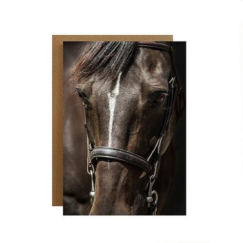 Handsome Horse Portrait Greeting card