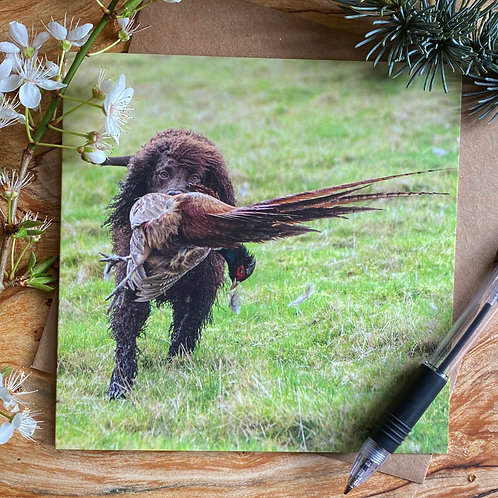 Irish Water Spaniel working -  Greeting Card