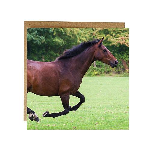 Horse Running Greeting card