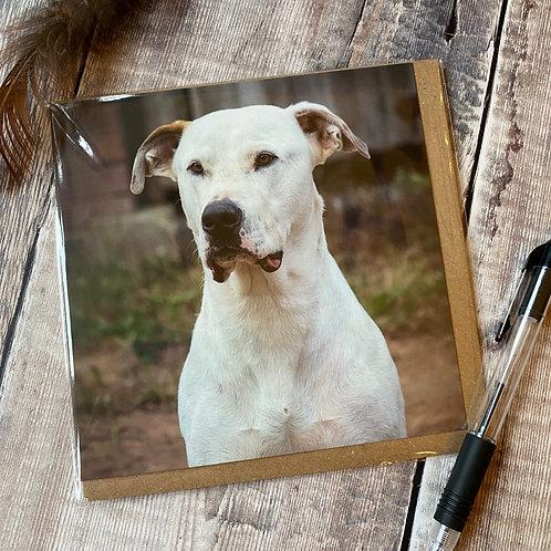 Lovely Dog Greeting Card