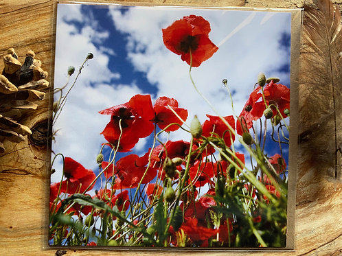 Poppy greeting card with summer sky behind