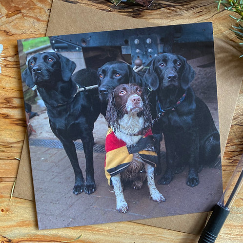 Three Black Labs & a Spaniel - Greeting Card