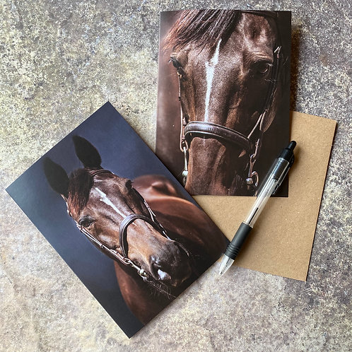 Two Horse Greeting Cards