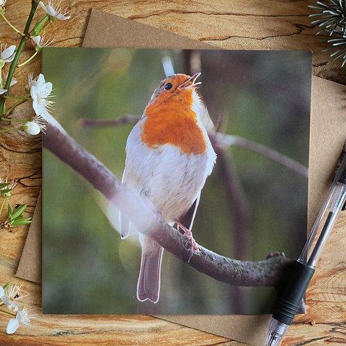 Singing Robin Greeting card