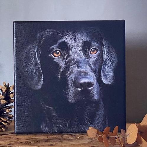 "Labrador canvas - 8"" black Labrador canvas"