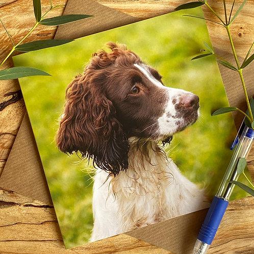 Spaniel Working Dog Greeting Card
