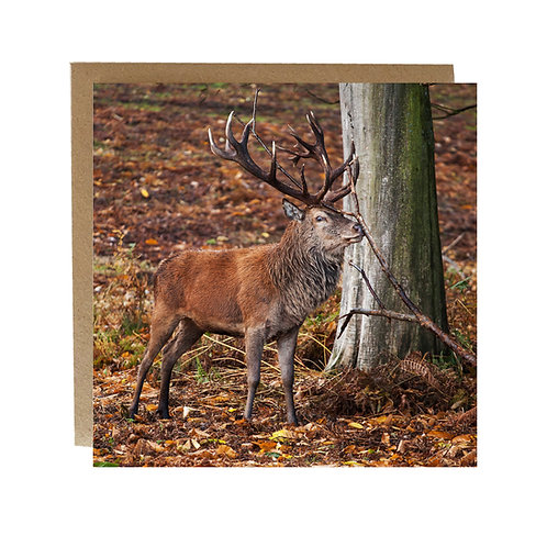 Stag scratching his nose in the woods Greeting Card