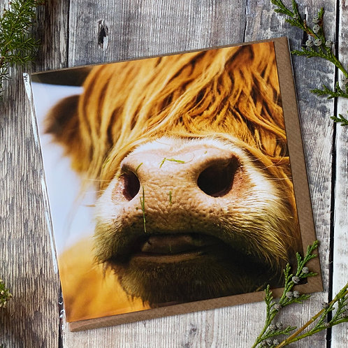 Highland Cow close up Greeting Card