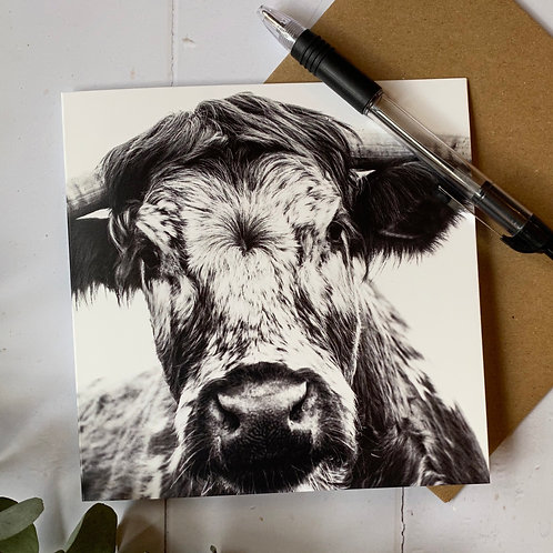 British Longhorn Cow Greeting Card