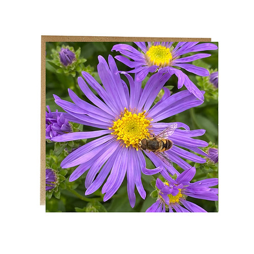 Purple flower with Bee on greeting card