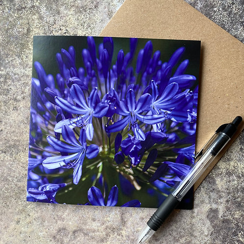 Purple Allium Greeting Card