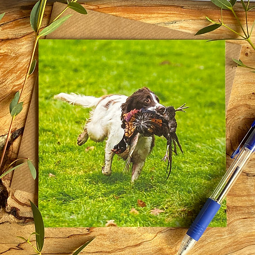 Spaniel Working Greeting Card