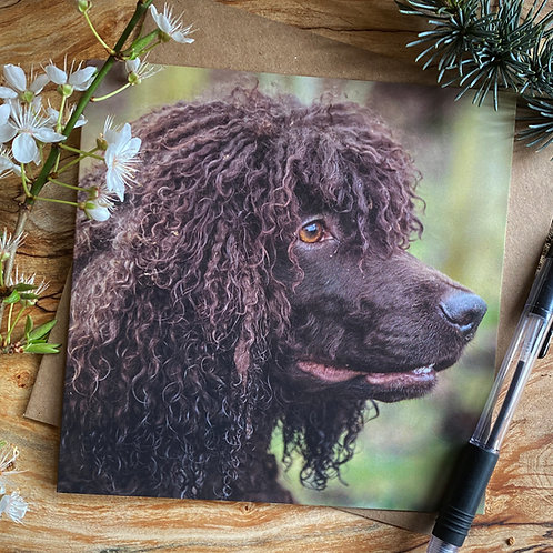 Irish Water Spaniel Greeting Card