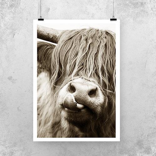 Highland Cow Print on Fine Art paper