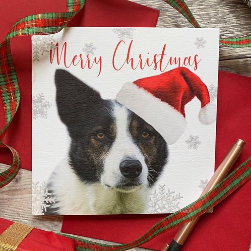 Collie Christmas Card