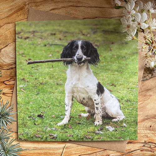 Charlie the Spaniel with his stick - Card