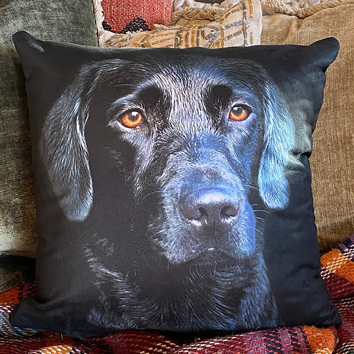 Black Labrador Cushion - 45cm square