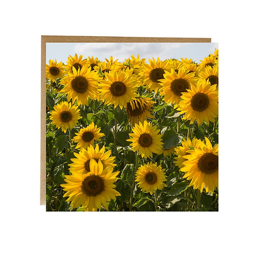 Field full of sunflowers Greeting Card