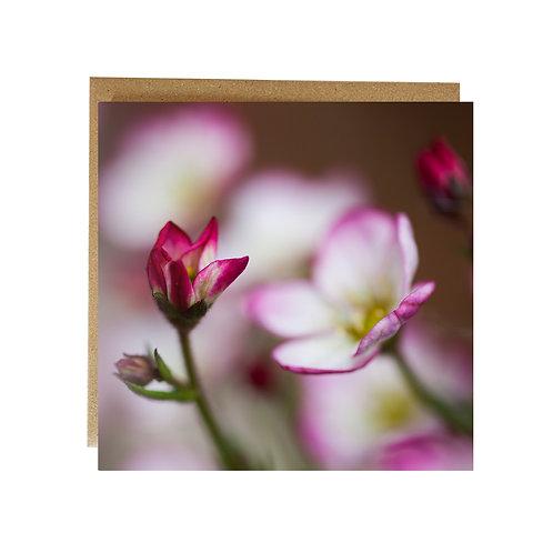 Pretty Pink flower greeting card