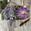 Thumbnail: Purple flower with Bee on greeting card