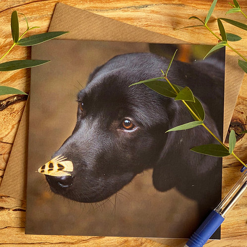 No I haven't seen a pheasant -  Labrador puppy card
