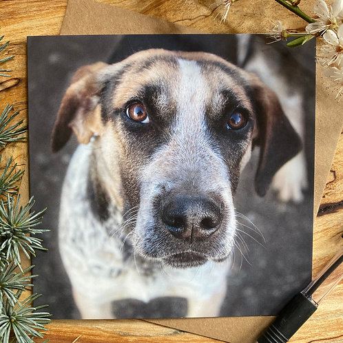 Grantham the hound Puppy Greeting Card