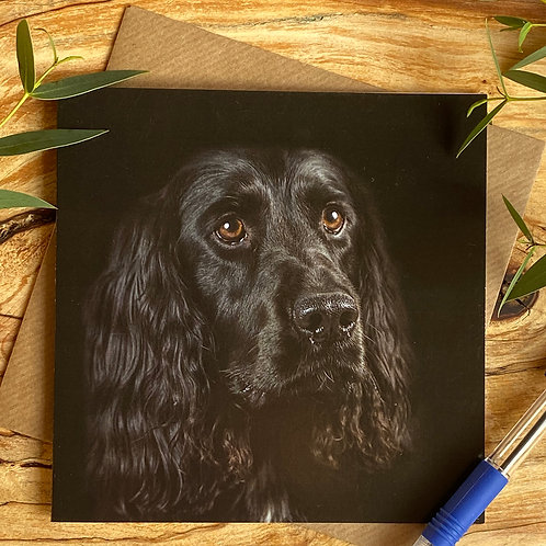 Black Spaniel Greeting Card