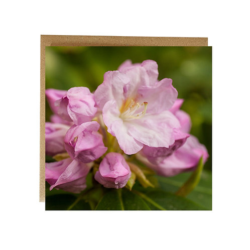 Pretty Pink Rhododendron flower greeting card