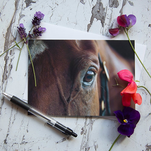 "Horse Greeting card - ""Watching"""