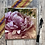 Thumbnail: Flower greeting cards - pack of 5  beautiful floral greeting cards