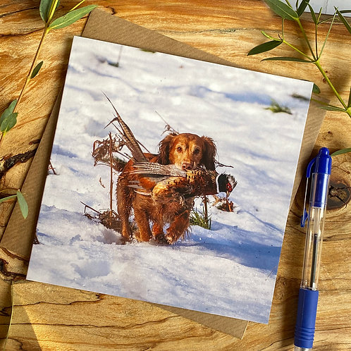 Spaniel picking up pheasant in Snow on Greeting Card