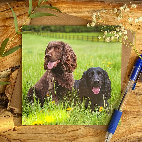 Pair of Happy Spaniels on greeting card