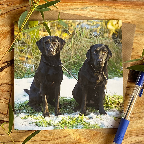 Two Black Labs in Snow Greeting Card