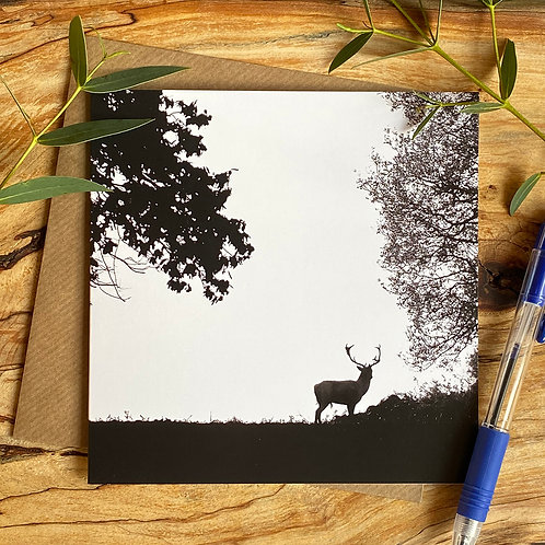 Lone Stag Greeting Card