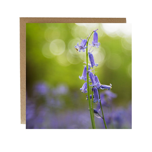 Bluebells in the woods Greeting Card