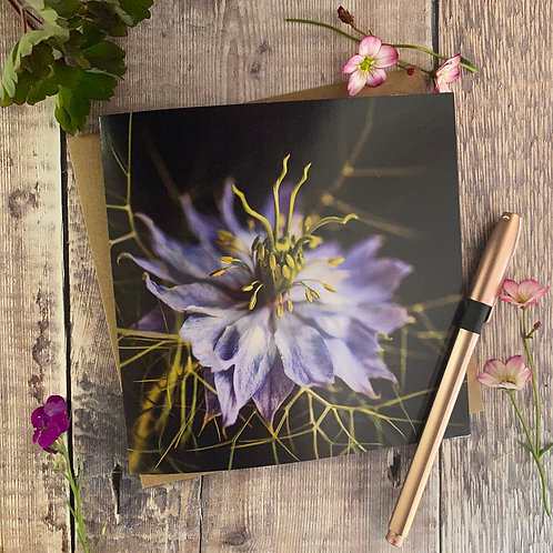 Blue Nigella in the Mist Flower card