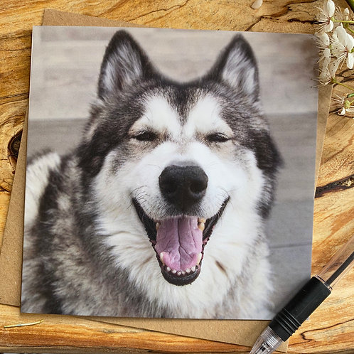 Happy, Smiley Malamute Greeting card