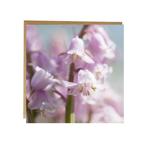 Pink Bluebells greeting card