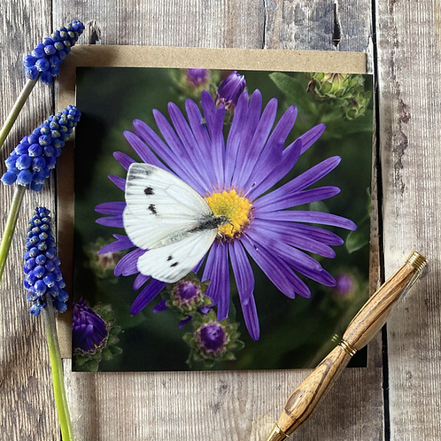 Cabbage white and flower greeting  card