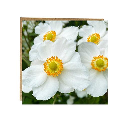 White Japanese Anemone greeting card