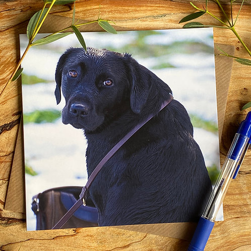 Am I carrying the Bag then - black lab greeting card