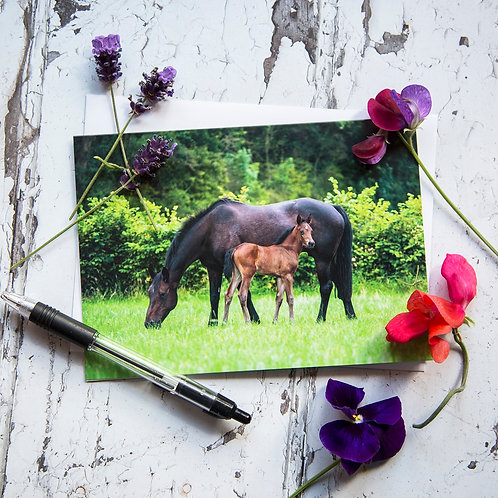 Mother and Foal Horse Greeting Card