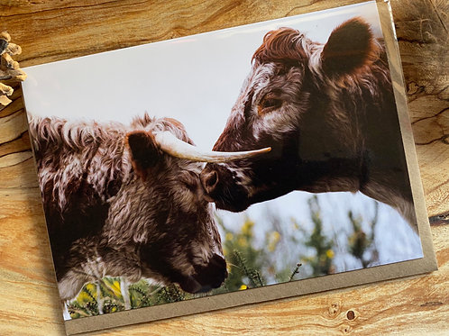 Tender Mother and Calf moment Greeting Card