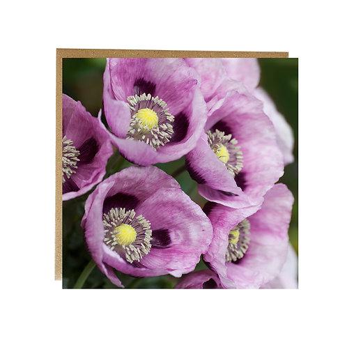 Purple Poppy flowers greeting card