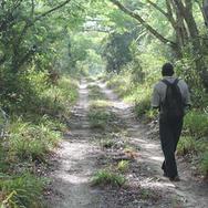 Arabuko Sokoke forest