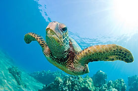 shwari-watamu-activities-turtle-.jpg
