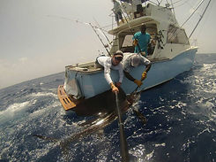 alleycat-sailfish.jpg