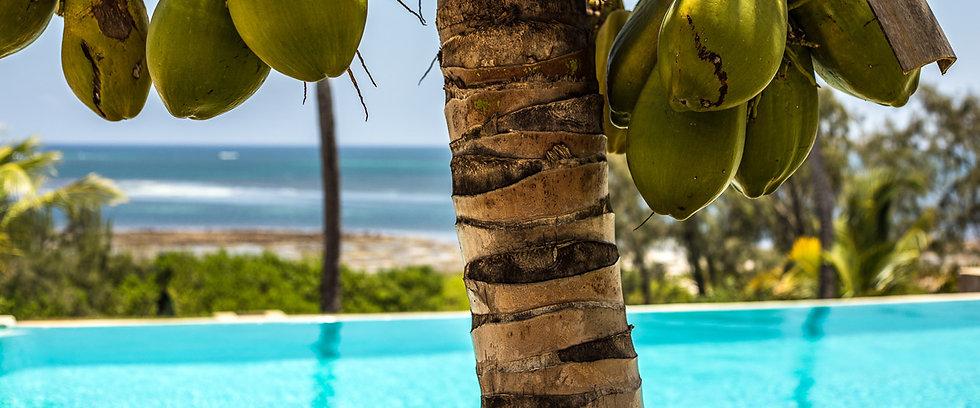 shwari-watamu-coconuts-.jpg