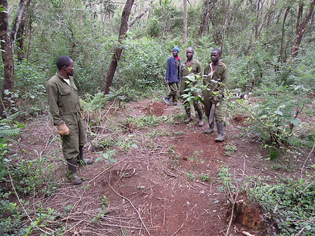 ngong-road-forest-association-section-1-